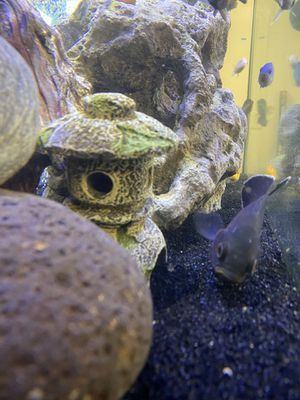 Fish tank rocks and decor for Sale in Rancho Cucamonga, CA