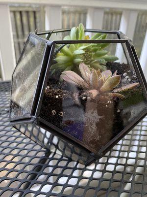 3 succulent octagon garden for Sale in Cambridge, MA