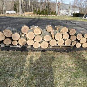 Free Firewood Bring Chainsaw for Sale in Danbury, CT
