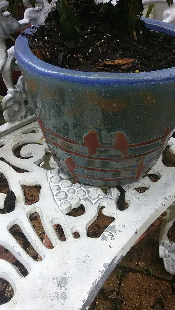 Old Blue Phlox un Terraglazed Pot