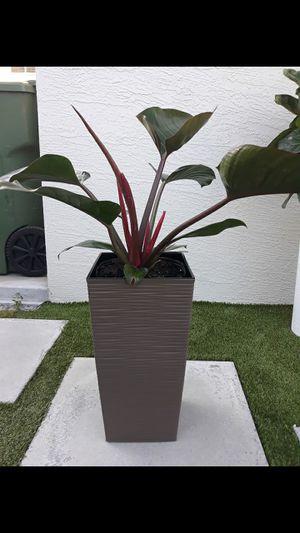 "Congo rojo plant pot incluye 18"" for Sale in Hialeah, FL"