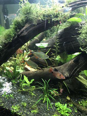 Donation / aquarium/ fish tank / for Sale in Murrieta, CA