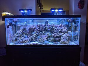 Saltwater live rock and fish for Sale in Bakersfield, CA