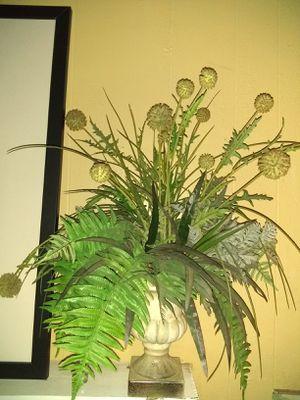 2 ficus plants for Sale in Bellflower, CA