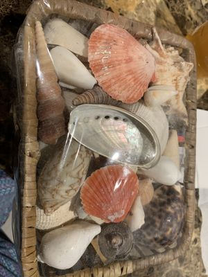 Real ocean sea shell variety colorful for Sale in Beverly Hills, CA