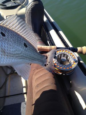 World Wide Sportsman Gold Cup IV 10-12wt reel (with sinking line) for Sale in San Diego, CA