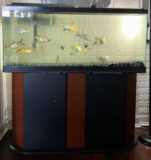 55 gallon fish tank w/ 11 koi fish and accessories pictured for Sale in Savage, MD