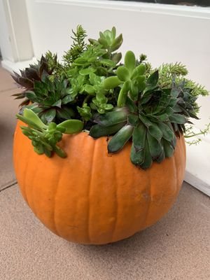 Succulent pumpkin planter / centerpiece for Sale in Seattle, WA