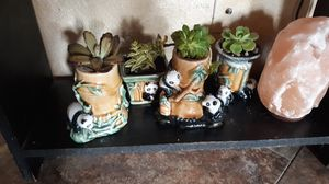 Live succulents planted in adorable ceramic Panda planters for Sale in Chandler, AZ