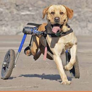 Large Dog Wheelchair for Sale in Blue Lake, CA