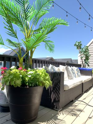 Outdoor Patio Foliage • Palm • Fiddle Leaf Fig • for Sale in Denver, CO