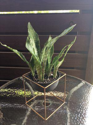 Plant arrangements for Sale in St. Louis, MO