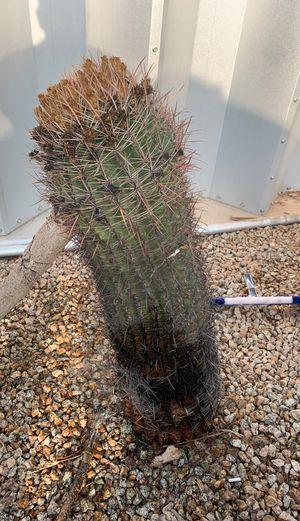 Cactus for Sale in Mesa, AZ