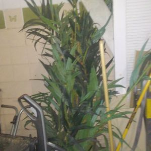 Fake Plant/tree for Sale in Las Vegas, NV
