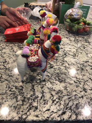 Peruvian Llamas, from Peru for Sale in Naperville, IL