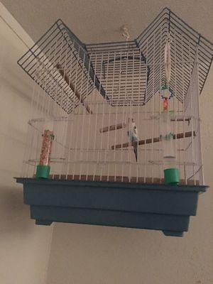 Parakeet bird for Sale in Lockhart, TX