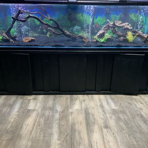 Fish Tank 300gal for Sale in Long Beach, CA