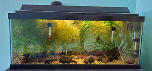 30 gallon fish tank with filter and accessories for Sale in Brooklyn, NY