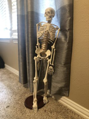 Anatomical Skeleton for Sale in Keller, TX