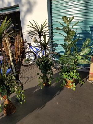 Decoration plants for Sale in Long Beach, CA