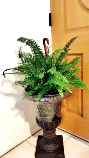 Very healthy Fern Plant - Just the plant - PLANTER IS NOT INCLUDED - Outdoor Shade Plant for Sale in Garden Grove, CA