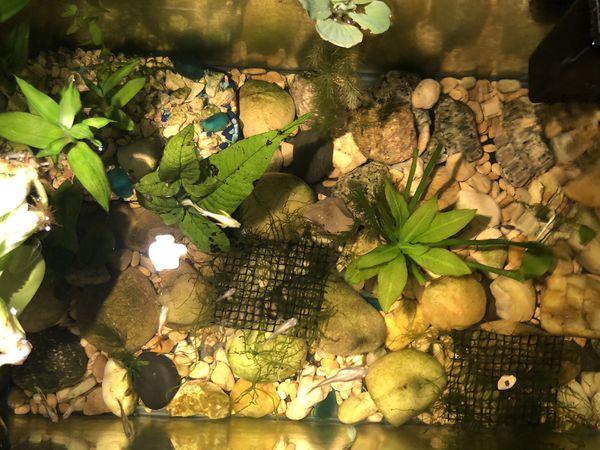20 Gallon Fish Tank with filter/ Aquarium plants