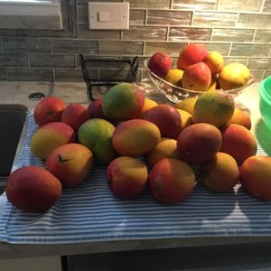 Mangoes - Taking Orders For New Crop for Sale in Hollywood, FL