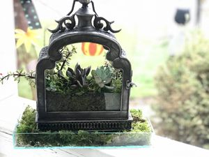 Custom Succulent lantern gardens for Sale in Colorado Springs, CO