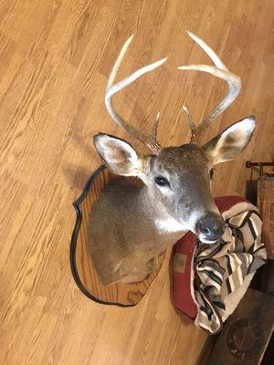 Deer Head Mount for Sale in Vernon, AZ