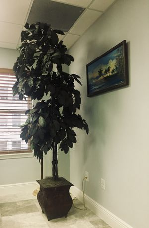 Large beautiful plant for Sale in West Palm Beach, FL