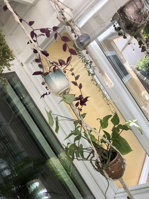 Double macrame plant holder for Sale in La Mesa, CA
