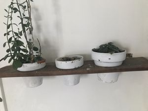 Plant Wall Holder for Sale in Los Angeles, CA
