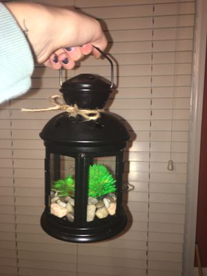 succulent lantern for Sale in Frederick, MD