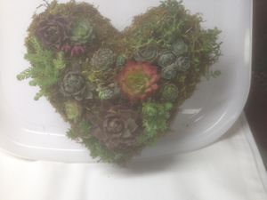 Topiary heart for Sale in Mooresburg, TN