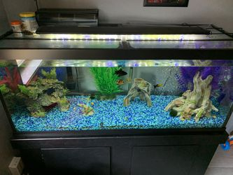 75 gal. Fish tank and stand for Sale in Oklahoma City,  OK