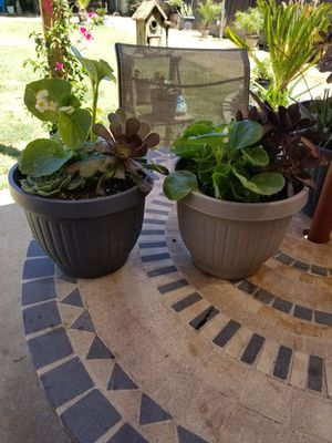 Succulent plants for Sale in Fresno, CA