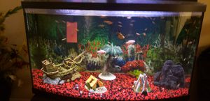 35 to 40 gallon fish tank for Sale in Fort Washington, MD