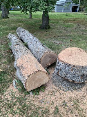 Large Oak Logs for Sale in Fairfax, VA