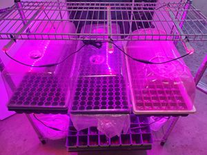 Clone rack with full spectrum LED bars for Sale in City of Industry, CA