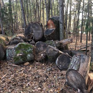 FREE Firewood. Cut And Carry! for Sale in Chapin, SC