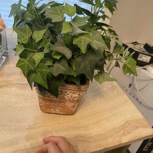 Decor Plant Fake for Sale in Weehawken, NJ