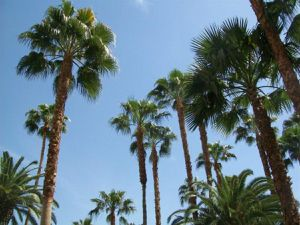 Tree trimming for Sale in Goodyear, AZ