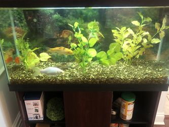 Fish Tank 38 Gallon W/ Stand And Accessories for Sale in Strongsville,  OH