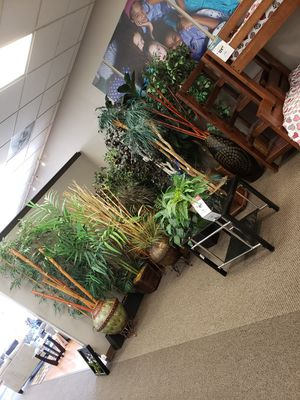 Each plant is $40 for Sale in King City, OR
