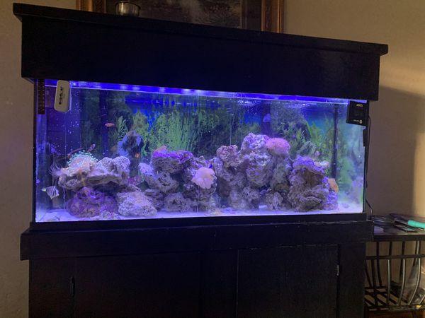 50 In Aquarium salt water