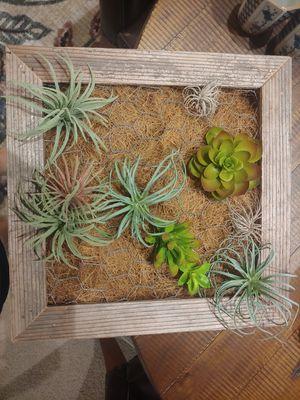 12 x 12 air plant/succulent box for Sale in La Mesa, CA