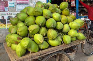 Coconuts FOR SALE for Sale in Davie, FL