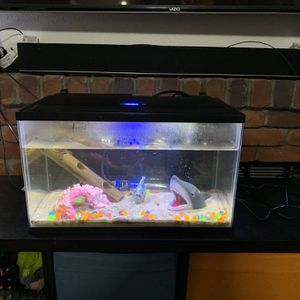 10 Gallon Full Aquarium Setup for Sale in Federal Way, WA