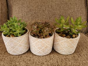 Succulents in white pot for Sale in North Las Vegas, NV