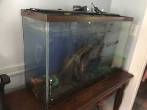 Fish tank and filter for Sale in Quincy, MA